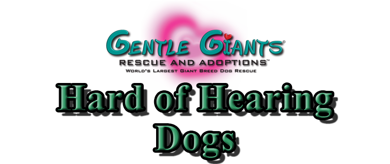 Hard of Hearing Dogs at Gentle Giants Rescue and Adoptions